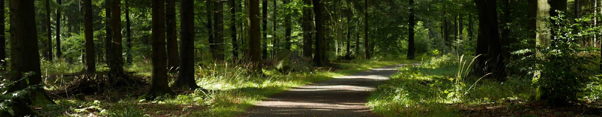 banner-green-meetings-forest